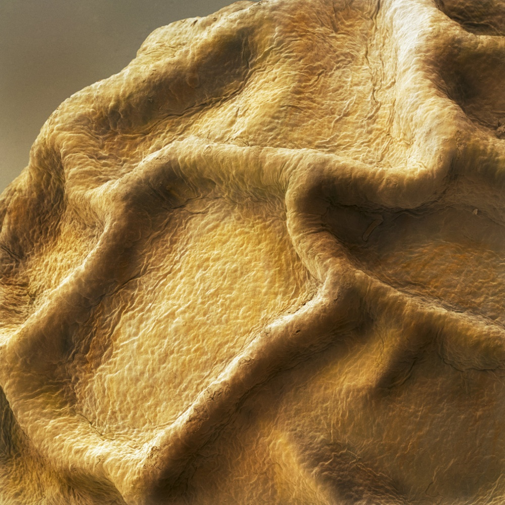 15 Food Photographed Taken  Under the Microscope Like You've Never Seen Them