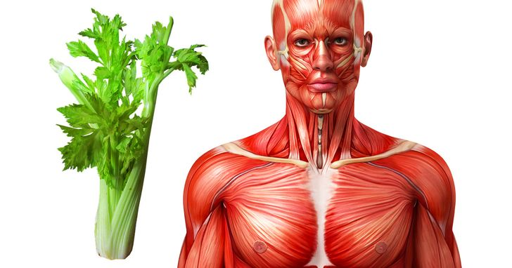 This Will Happen to Your Body If You Eat Celery for a Week