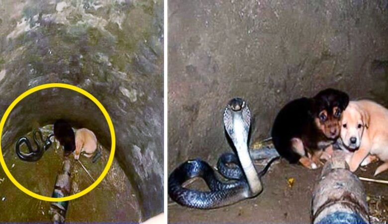 Two Puppies Fell Into A Pit With A Cobra Then Something Incredible Happened