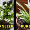 10 Houseplants That Are Good for Your Health