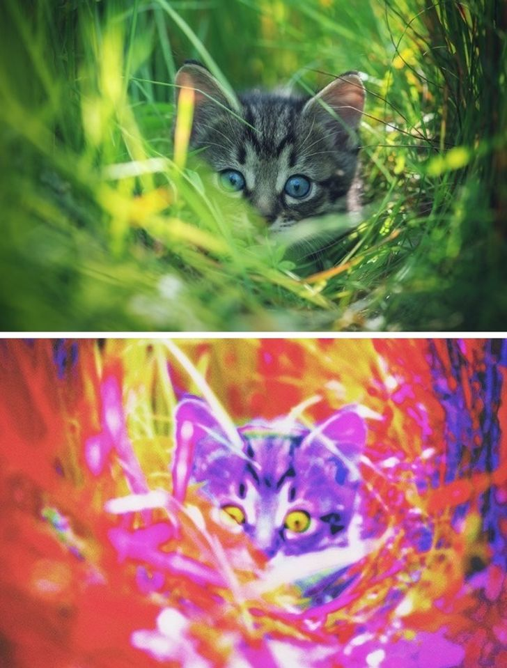 What the World Looks Like Through the Eyes of Different Animals